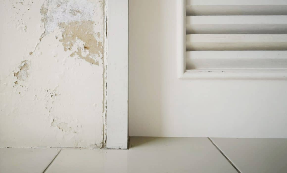 Steps to Hire Mold Removal and Remediation Specialists